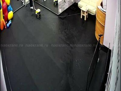 Установка системы удаленного видеонаблюдения в кинологическом центре Dogfit